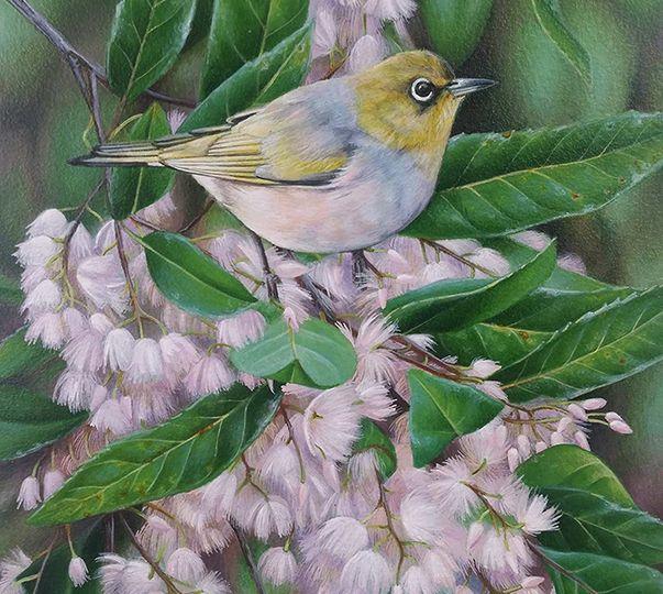 silvereye_heidi willis_bird artist_acrylics