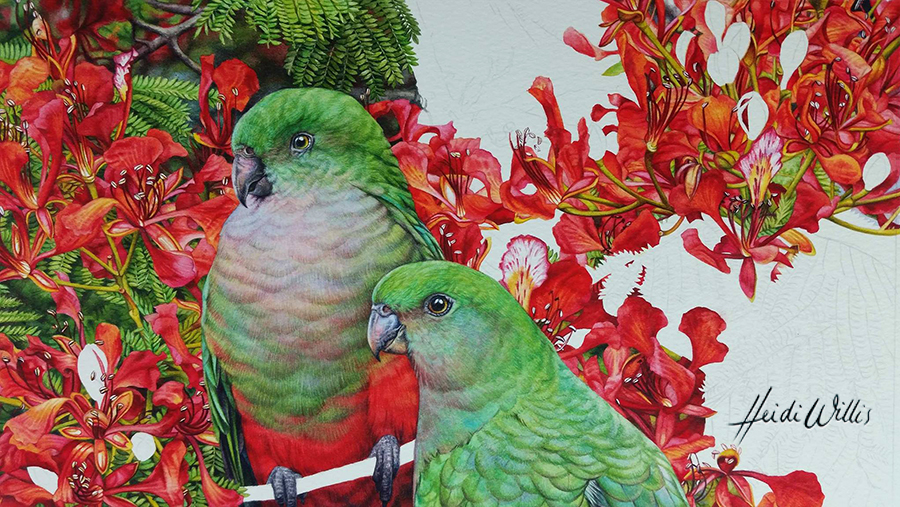 w_heidi willis_king parrot_bird painting_watercolour