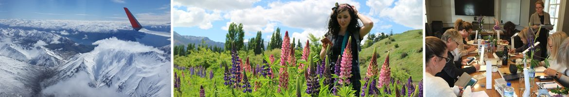 heidi willis_botanical_watercolour_painting class_NZ_lupine