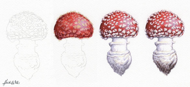 Heidi Willis_artist_toadstool illustration_fly agaric_painting tutorial