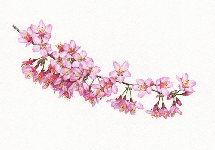 Blossom Botanical Study 1