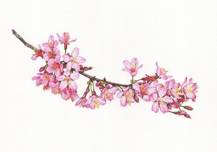 Blossom Botanical Study 2