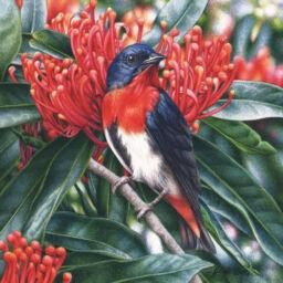 artist_heidi willis_Mistletoebird_bird paintng_watercolour