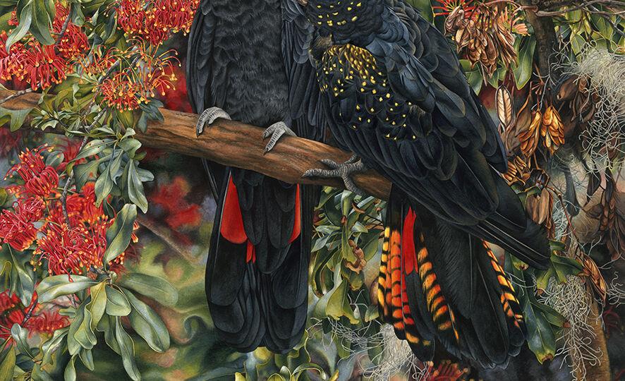 Heidi-Willis_Black-Cockatoos-painting_watercolour_australian-artist