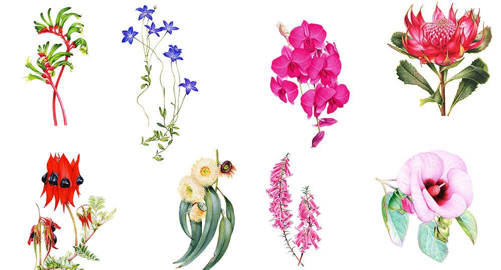 Heidi-Willis_Botanical-Artist_watercolour_australian-geographic_floral-emblems-all