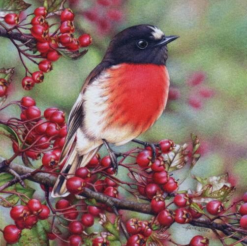 Hawthorn and Scarlet Robin Painting